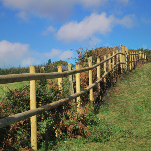 Fencing in the South Hams by Radley Veale